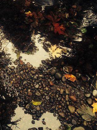 Creek-Rock storyfb